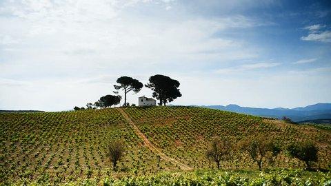 Landscape with vineyard on the  road between Ponferrada and Sarria, Province Leon, Spain, Europe. Camino de Santiago.