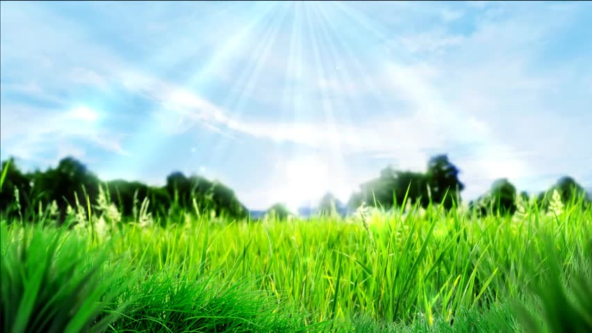 grass and sky backgrounds. Animated Yellow Dandelions Video Background On Meadow For Web Sites Backgrounds, Intro Video, Natural Grass And Sky Backgrounds