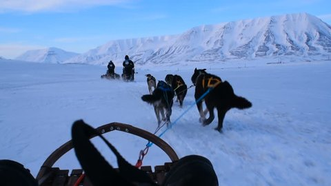 sled dogs pulling a sledge in mountains in snow storm. Svalbard, Norway