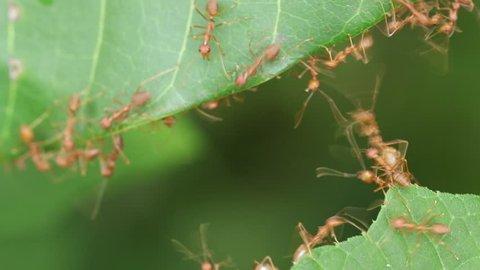 Ant action standing.Ant bridge unity team