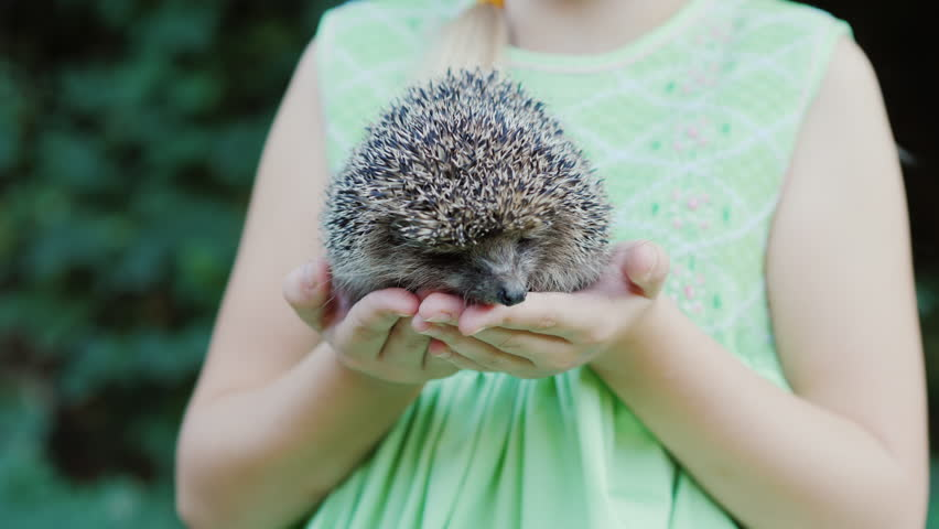 A happy child holds a small hedgehog in his hands. Children and wildlife, a well-healed and caring concept.
