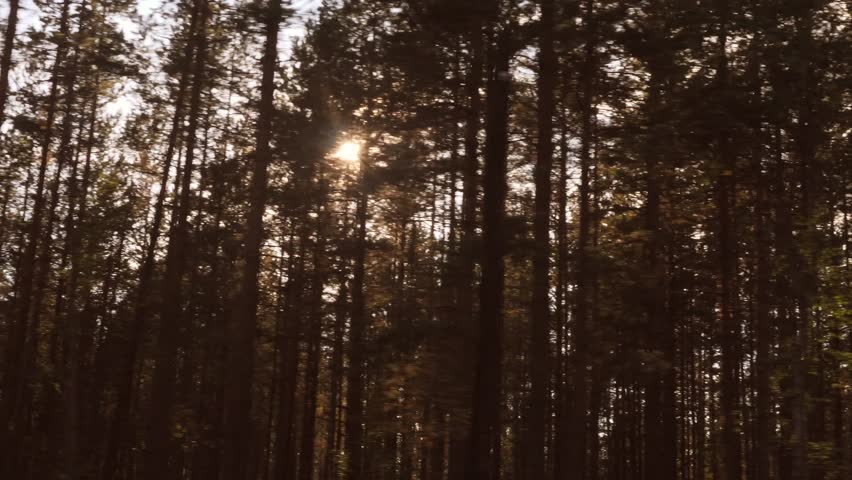 View from Car Window at Sunlight Thru Pine Tree Autumn Forest. 4K, Slowmotion. | Shutterstock HD Video #30972544