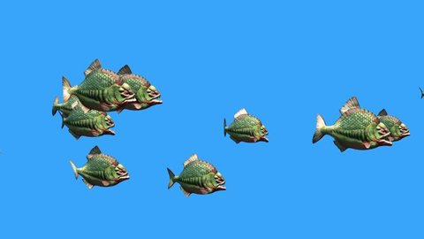 Group Fish Piranha Fast Swim Blue Screen 3D Rendering Animation