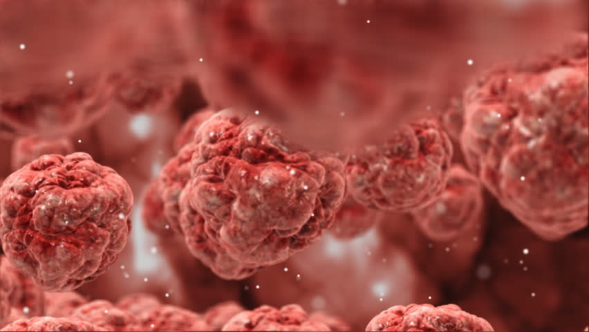 Inside Human Body,red Blood Cells,highly Stock Footage Video (100 ...