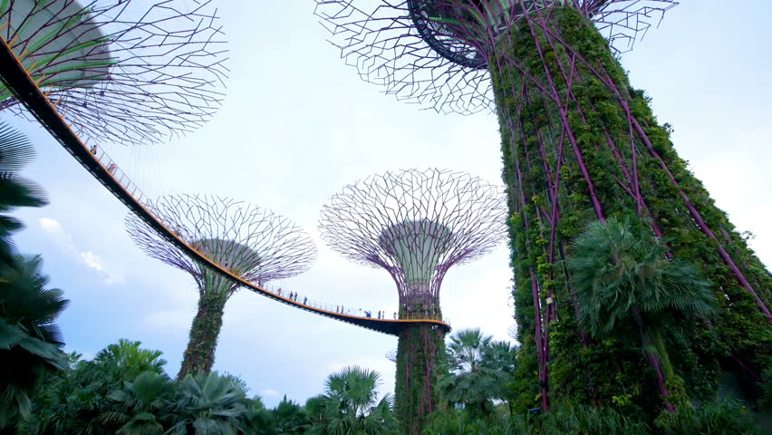 singapore 21 august 2017 view of the supertree grove at gardens by the bay