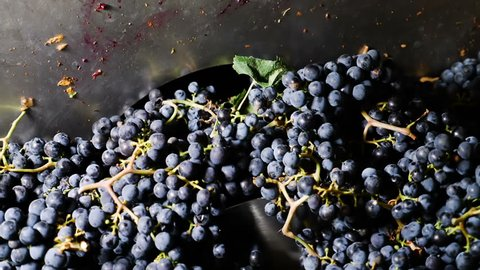 Grapes harvest: squeezing with the press- South of Italy