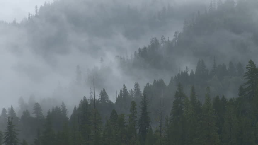 Haunting, spectral mists move fluidly from right to left around and through a coniferous mixed forest on a series of mountain ridges after a rainstorm. Moderate time lapse.