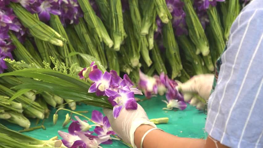 close up of a thai woman arranging orchids at pak khlong talat flower market in bangkok, thailand