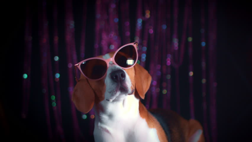 4k Funny Dog and Boy Posing with Sunglasses