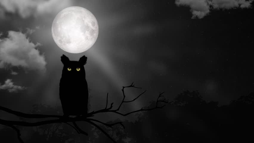 Halloween night with angry owl