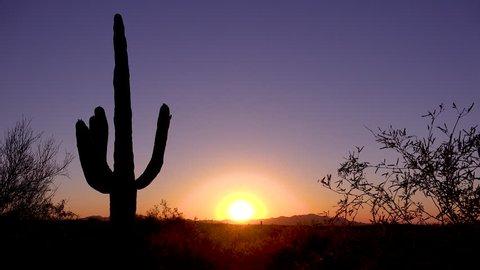 CIRCA 2010s - Saguaro National Park, Arizona - A beautiful sunset or sunrise behind cactus at Saguaro National Park perfectly captures the Arizona desert.
