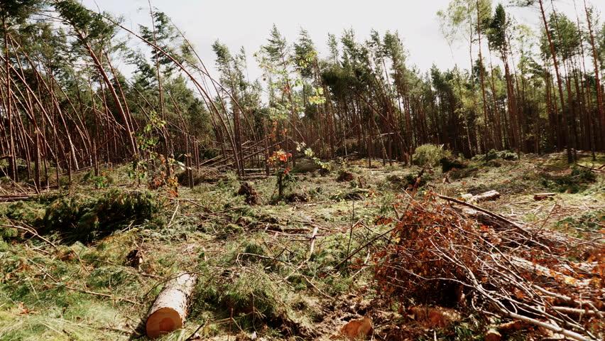 Deforestation 動画素材 4039669...