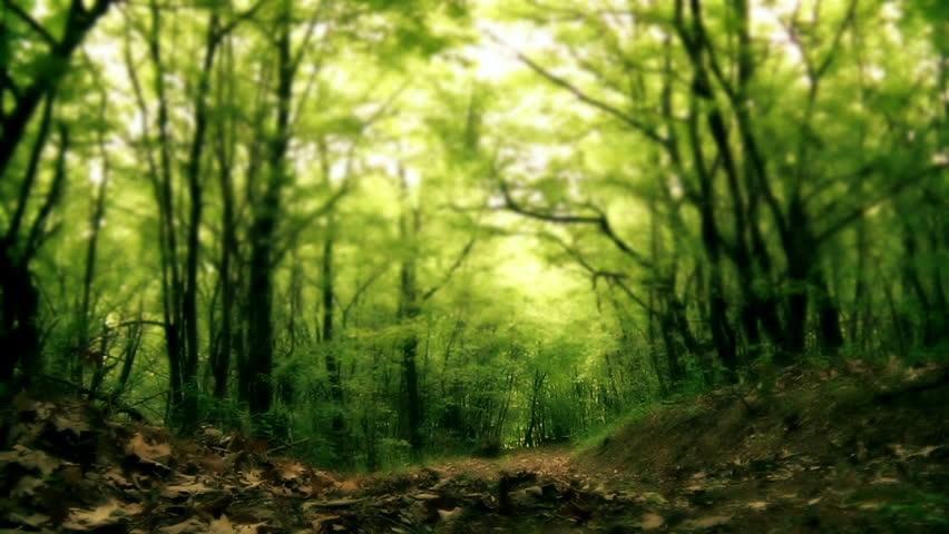 Man running away in the woods
