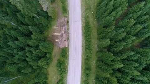 Aerial - Top down static shot of spruce forest and a white van driving by
