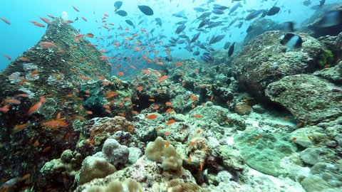 Coral reef biodiversity with several species of reef fish underwater at Pulau Weh, Indonesia
