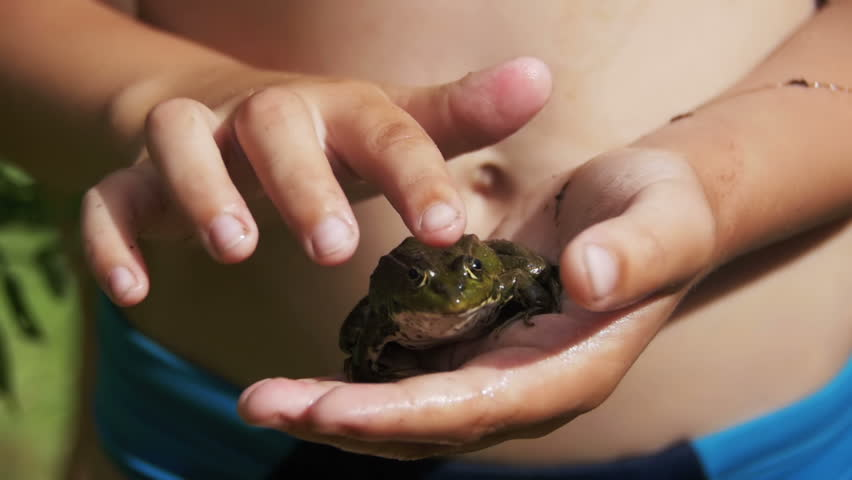 The child is Stroking a Green Frog in his Hand. Slow Motion in 96 fps. Close-up. The toad blinks his eyes, stirs his nostrils and breathes. Summer, sunny day.   Shutterstock HD Video #31563424