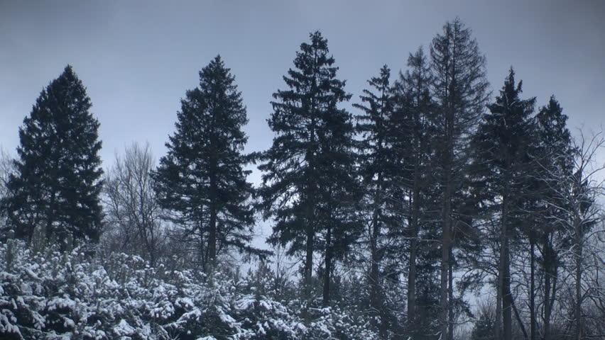 dark winter forest ว ด โอสต อก ปลอดค าล ขส ทธ 100 3174454