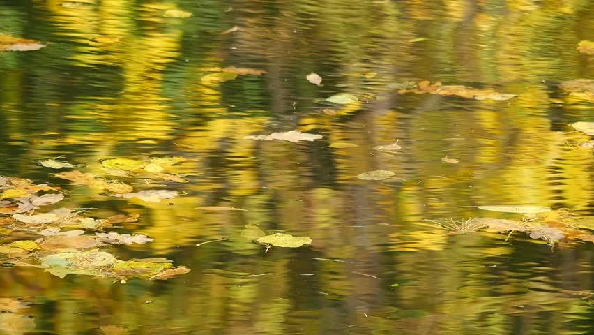 Autumn leaves floating on the water   Shutterstock HD Video #31776484