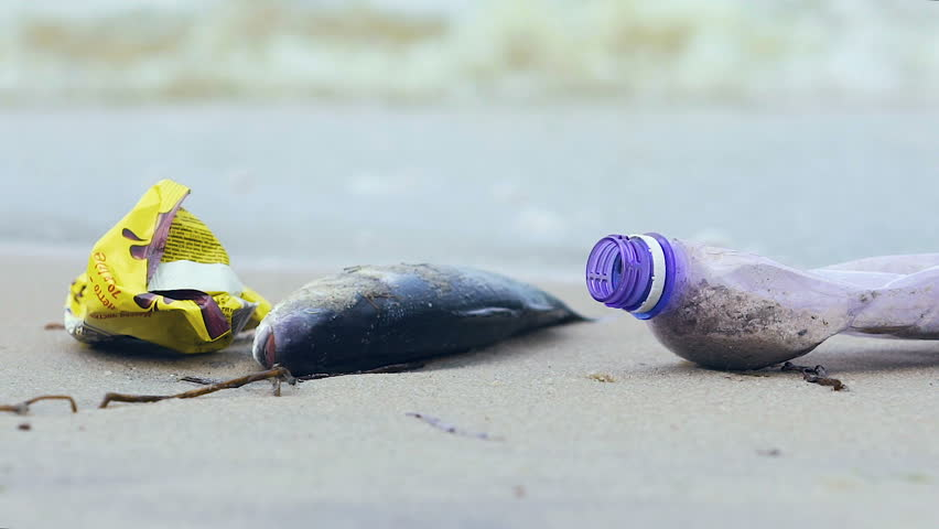 Dirty ocean shore with dead fish, waves picking up debris and litter, ecology