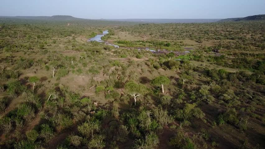 Kudu antelope in wilderness of Kenya. Filmed from aerial drone
