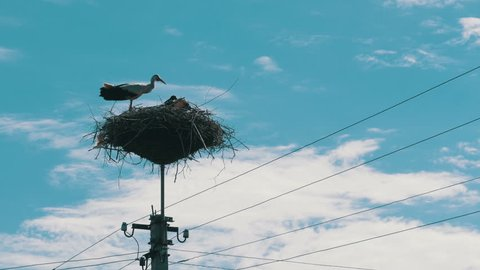 Storks Family in its nest on a pillar. Stork in a Nest on a Pillar High Voltage Power Lines on Sky Background. Stork Sits on a Pole and Moving Clouds in a Blue Sky.