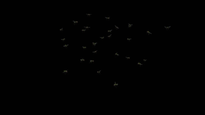 Fly Swarm - Flying Around - IV - Alpha Channel - 4K Ultra HD realistic looped 3D animation with transparent background.