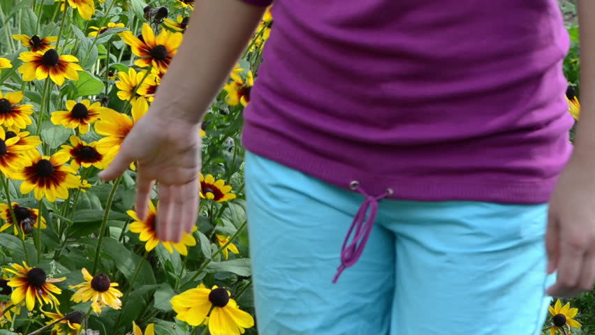 woman walk near rudbeckia flowers and hand touch blooms in garden.