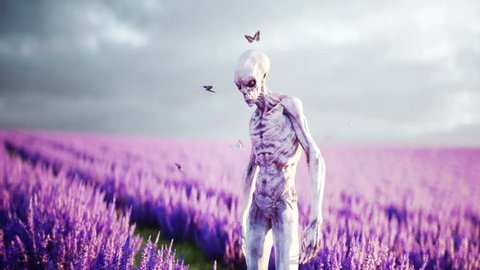 Alien with butterflies in lavender field. concept of UFO. Realistic 4k animation.