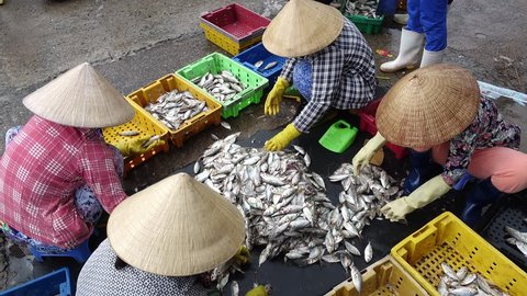 Long Hai market, Ba Ria, Viet Nam - August 25, 2017: Local people working at marketplace, woman is selective fish and man is carrying basket fresh fish from ship on the beach