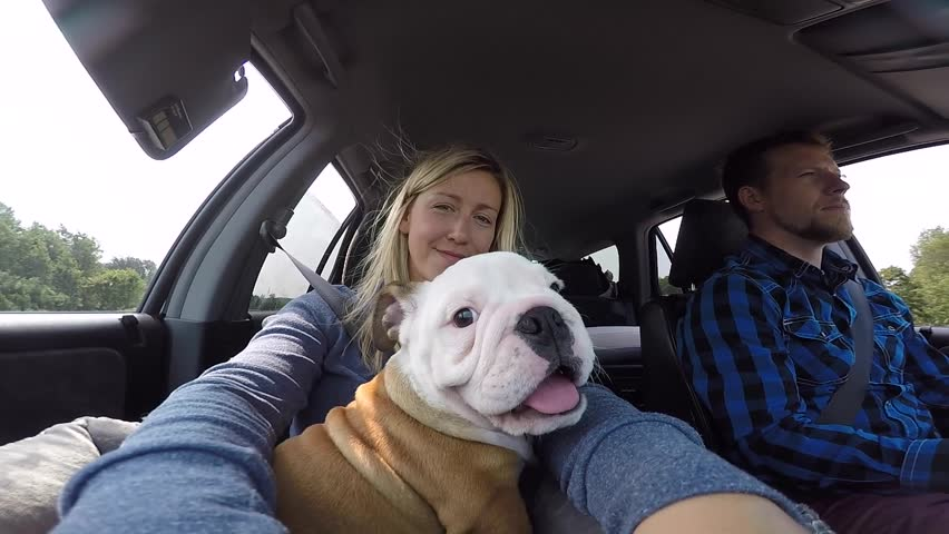 cute puppy in car with his new family