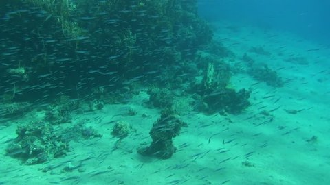 school of fish 04