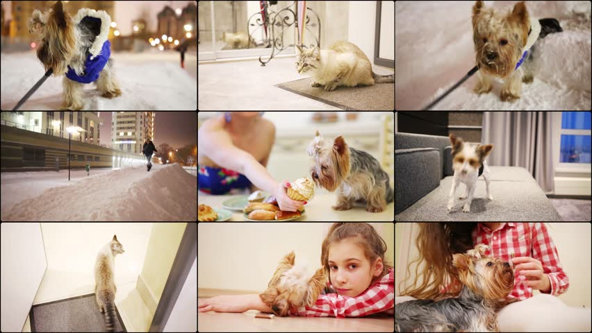 Several videos with pets - dogs and a cat, collage 4K