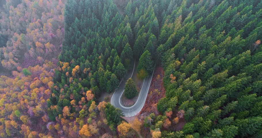Forward aerial top view over car travelling on road in colorful autumn forest.Fall orange,green,yellow red tree woods.Mountains street path establisher.4k drone flight straight-down establishing shot