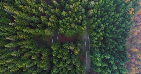 Overhead aerial top view over car travelling on hairpin bend turn road in countryside autumn forest.Fall orange,green,yellow pine tree woods.Fog Street path establisher.4k drone flight straight-down