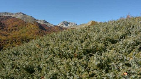 Abruzzo National Park Lazio Molise, Italy, video with slider