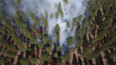 Red flames and lots of smoke are seen looking down at a forest fire from above.