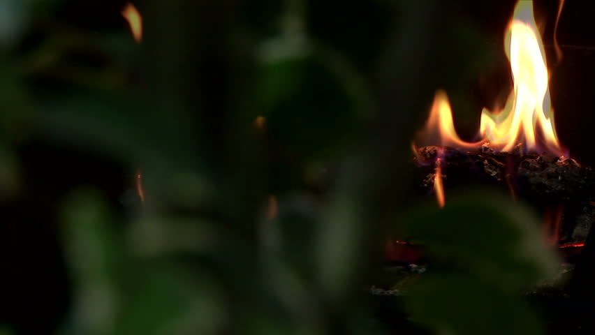 Radial dolly shot of out of focus foliage in the foreground and in focus burning fireplace log in the background.  | Shutterstock HD Video #324814