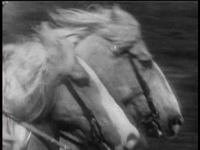 Close-up of two horses running neck and neck in race