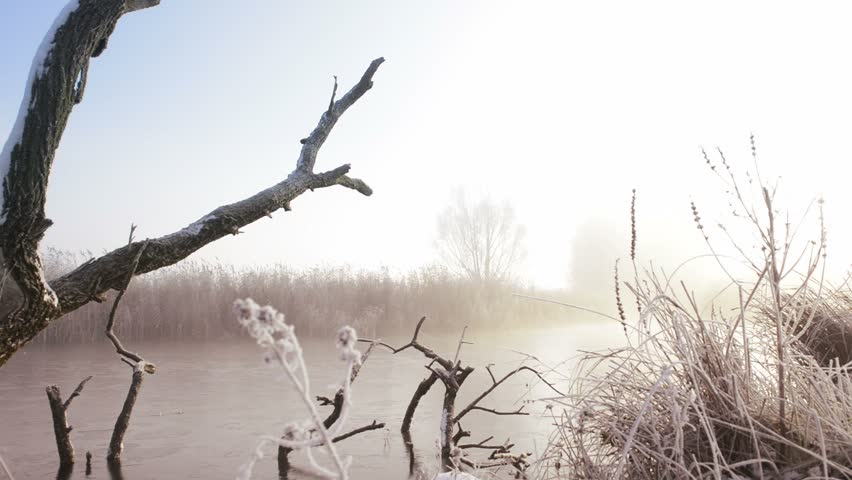 Dead tree in a snowy winter landscape during an early foggy morning.
