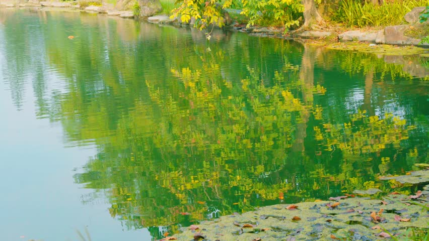 Lake and tree reflection | Shutterstock HD Video #32663494