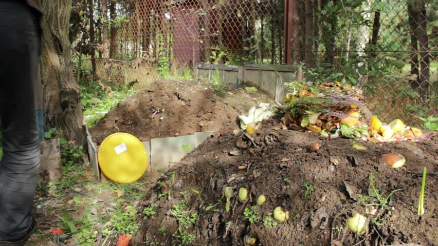 Compost pile. Man throws food waste onto a compost pile.