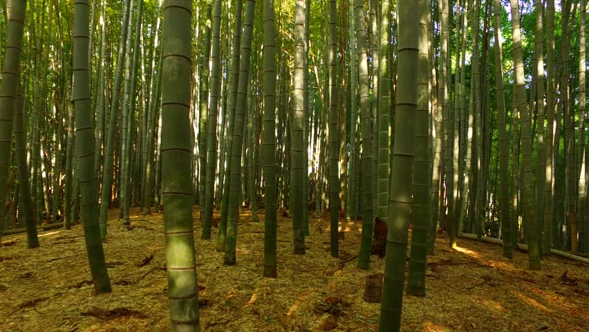 a sequence analysis the bamboo forest fighting After the glorious fight in the bamboo forest—the film's most famous sequence, reworked by ang lee in crouching tiger, hidden dragon—the original first part ended part two doesn't have such a clear-cut arc, perhaps because hu was still planning and shooting it when the first part was released.