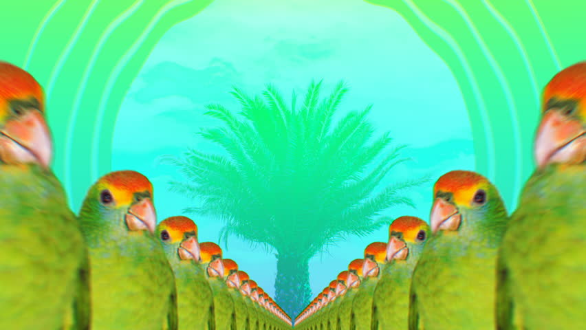 Minimal Motion collage art. Fashion Many Parrots Tropical vibes Beach Party mood