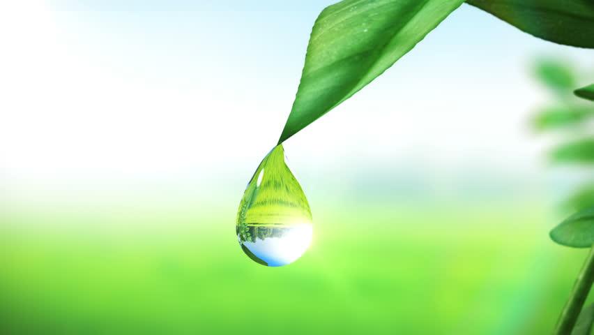Dewdrop on leaf, Beautiful animation. HD 1080.