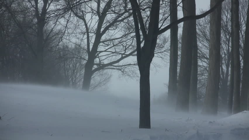 Scenic of wind blowing the snow around in a park (High Definition)