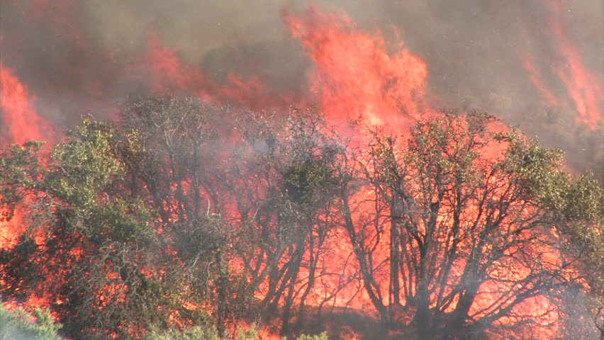 Wildfire Flames, Forest Fully Engulfed by Fire 2