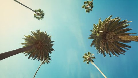 Driving through Beverly Drive. Los Angeles, California. Palm trees against a summer sky. United states. Loopable. Green.