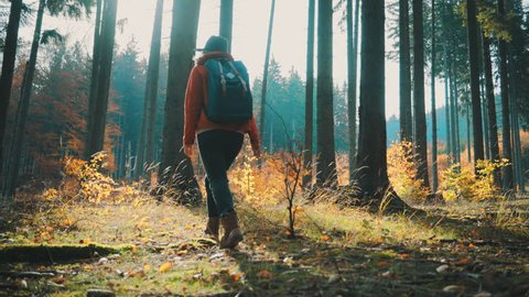 Woman tourist walking in the fall forest on sunny autumn day, 4K