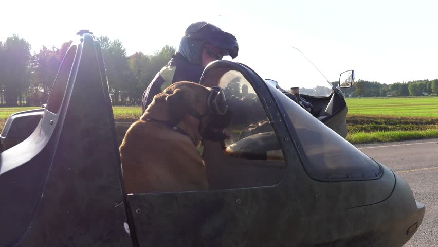 mastiff dog rides in motorcycle sidecar looks at you and drives away 4k slow