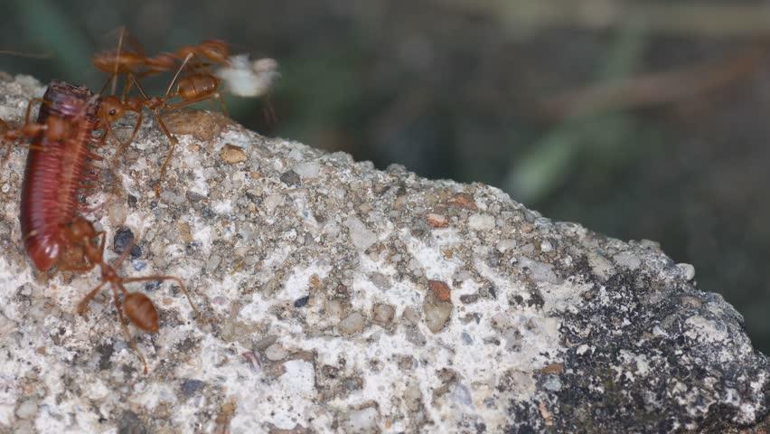 Header of arthropod